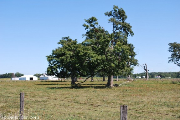 A view of John Martindale's land entry, as seen from Jacksonburg Road